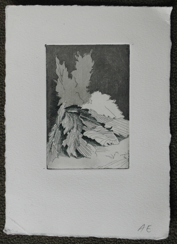 State 3: This print was pulled after etching an aquatint. After applying Liquid Asphaltum to places that I did not want to be etched, I put the plate in a Rosin Box. Drops of an acid resist settled on my plate and after 8 minutes I took it out of the box, melted the drops over a hot plate and let it cool. I then put the plate in the acid for 20 seconds, washed the acid off quickly and applied more liquid asphaltum. This time, I put the liquid asphaltum over what now looks like the slightly lighter leaves. I let the background be etched for 20 more seconds, creating an even darker tone.