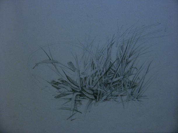 Grass drawn in Thunder Bay, Ontario.