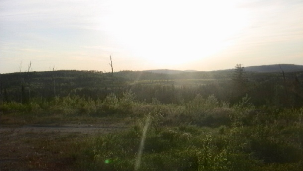 June 16- I followed an logging road up to the top of a hill. Though much of the surrounding lightscape was victim of lumber industry, it was beautiful in the midst of its death and renewal. And the light, oh, the light!