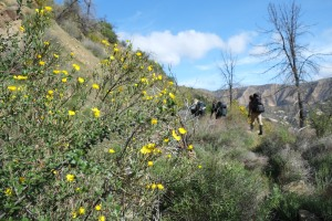 Day 2: Hiking by some of the beautiful wildflowers we encountered along our way.